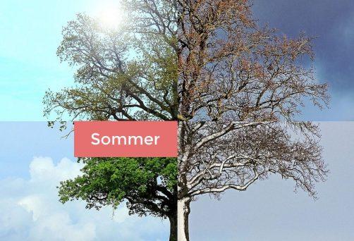 Mit Yin Yoga durch die Jahreszeiten: Sommer