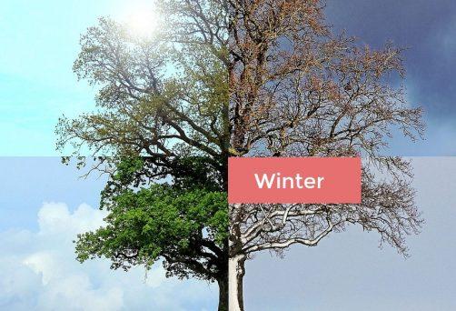 Mit Yin Yoga durch die Jahreszeiten: Winter (ABGESAGT)